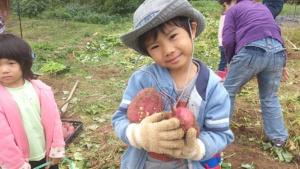 食育体験でさつま芋を収穫する子どもたち