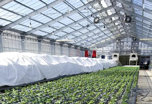製造業で活用されているカイゼンやQCDの手法を農業に活用、生産性を2倍近く向上した例が相次いで登場している(提供:JMAC)
