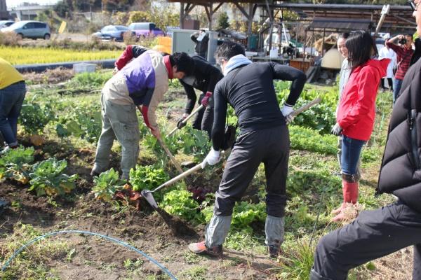 農作業によって「幸せホルモン」が分泌される(写真:順天堂大学)
