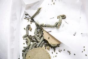 平塚にあるJA全農の営農・技術センター。ここでは害虫を飼育し、農薬の効果を測定している。(写真:木村 輝)