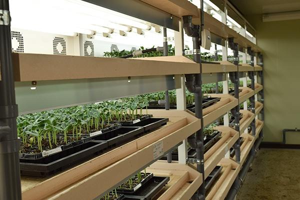 東日本の野菜苗の生産拠点となるベルグ福島の閉鎖型テラス