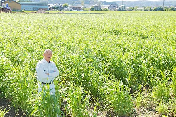 JAアグリひみで生産するハトムギを背にする小坪勝之部長。今年の生育は良く、「この状況なら反収220キロはいくでしょう」と予測する。(写真:佐藤久)