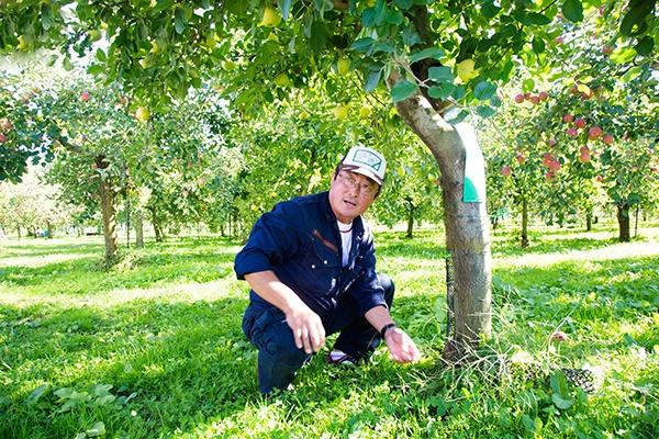 田沢農園 園主の田澤俊明さん。様々なりんごの栽培技術を工夫しているりんご名人とも言える生産者だ。後に「飛馬ふじ」になるりんごの栽培に成功した。今も「飛馬ふじ」や他の品種を作りながら、次を見据えて、さらに上を行くりんごの開発に取り組んでいる(写真:佐藤久)
