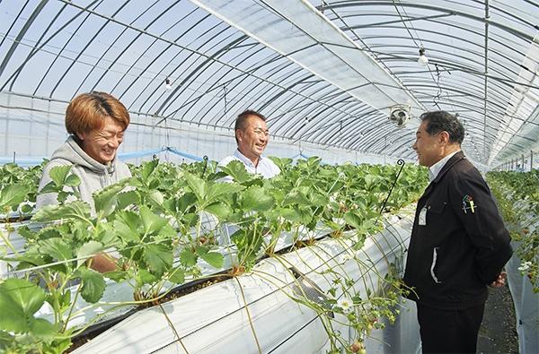 イチゴ農家の徳永さん(写真中央)、息子の達也さん(写真左)と対話する藤本氏