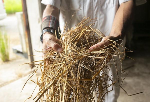 飼料となる島内産の稲わらは、石垣牛の安心を訴える好材料になっている