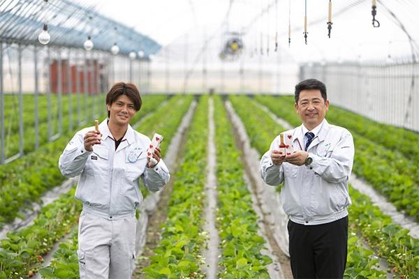 「あまおう」を栽培中のハウスにて。次なるヒット商品を目指してJA柳川の取り組みは続く