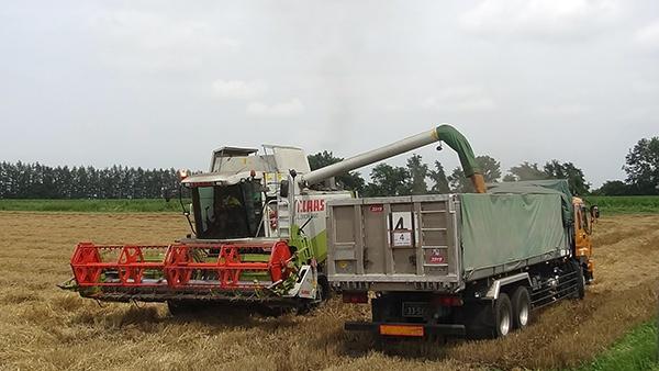 コンバインによる小麦の収穫風景。作業効率化には収穫情報の見える化が必須だった
