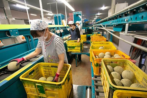JAグループ熊本の青果物の流通を下支えする、JA熊本経済連の園芸集送センター