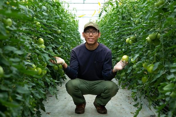 30~40代の若い世代のトマト生産者が半数を占める