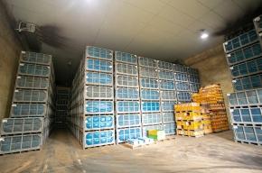 収穫したナガイモは冷蔵庫で保存され、年間を通じて出荷されている