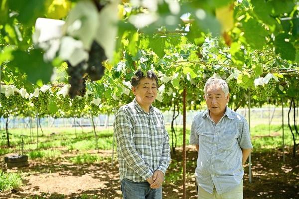 ぶどう栽培に最適な伝統ある産地を絶やさないための挑戦は続く