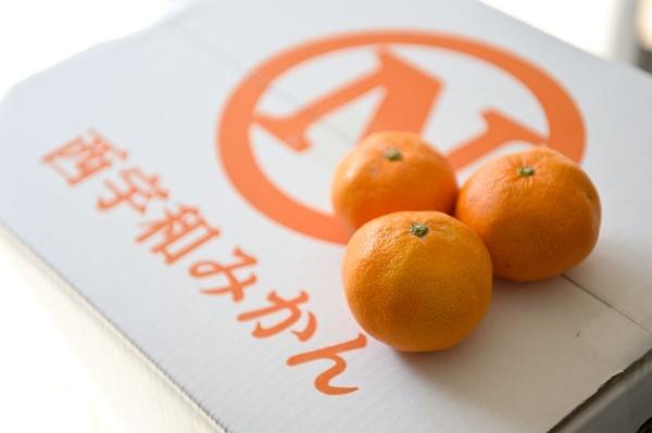柑橘類にとって恵まれた土地ですくすくと育った西宇和みかん