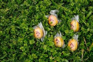 広島県の西条(現・東広島市)が原産といわれ、中国地方で人気の柿だ