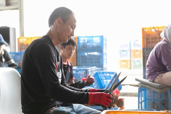 取材当日も外国人実習生が赤玉ねぎの出荷作業を行っていた。