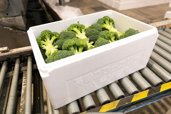集荷場に集められたブロッコリーはすべて発泡スチロールに梱包される。鮮度を保つことができ、大きな差別化のポイントになった