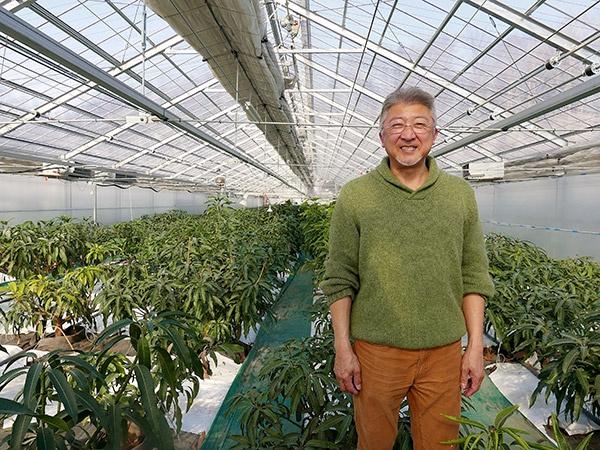 ハウス内には250本のマンゴーが植えられている