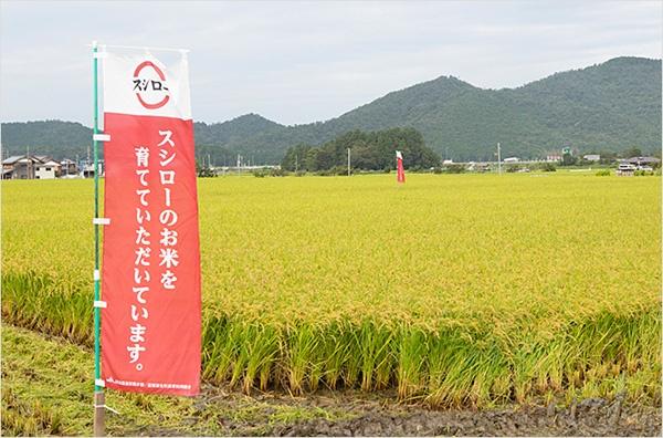 スシローのお米を作ってもらい、生産者のモチベーションアップに貢献 <br>(写真:あきんどスシロー)