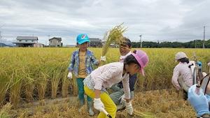 秋の稲刈りイベントの様子。鎌を使った稲刈りや足踏み式脱穀機など、子どもたちは初めての体験に夢中 (写真:あきんどスシロー)