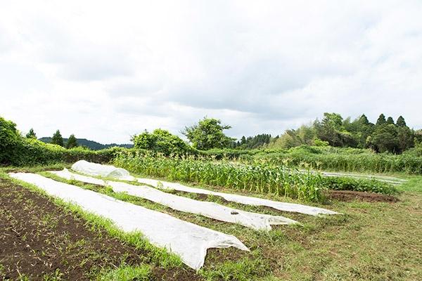 「全国農地ナビ」では農地情報が更新され、その農地に合った作物を選定できる(写真:ソフトバンク・テクノロジー)