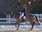 馬術競技の成績集計を効率化し 観客・選手の満足度向上に貢献する「タフパッド」